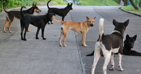 हाईकोर्ट का बड़ा आदेश- रिहायशी इलाकों में आवारा कुत्तों को खाना नहीं खिलाएंगे
